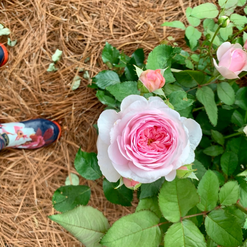 Peony and Boot