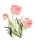 Tulips RGB