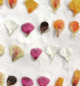 Edible Flowers pic 1