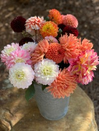 more dahlias 2020